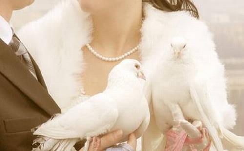 Доставка голубей по киеву бесплатно.  Заказывайте голубей на свадьбу или...